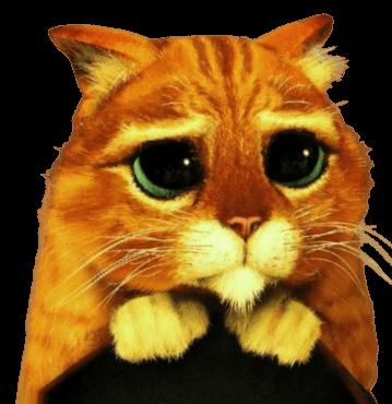 кот просит оставить заявку